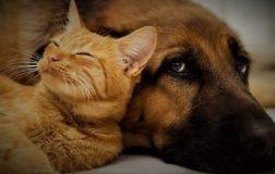 Cina: cani e gatti finalmente non saranno più macellati e mangiati