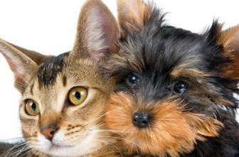 Perché sterilizzare i nostri animali? Contro il randagismo e prevenzione malattie.
