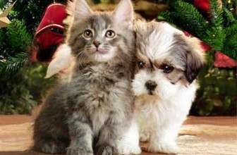 Consigli utili per i nostri pet durante le feste di Natale