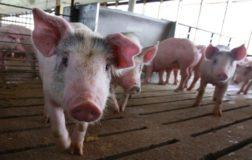 L'etica Animalista e il comportamento umano