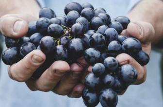 L'uva è un toccasana per la salute: ecco tutti i benefici