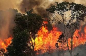 Amazzonia in fiamme: la tragedia raccontata sul web