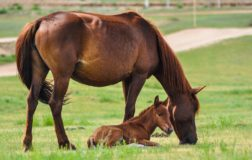 Grecia stop alla macellazione dei cavalli: la vittoria degli animalisti