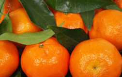 Mandarino, il frutto con tante proprietà benefiche