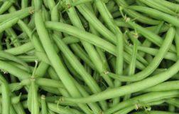 Fagiolini, i legumi preziosi per il nostro organismo