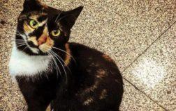 Storie di gatti, sentenze e …Ciampolillo
