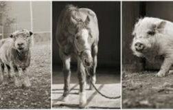 Isa Leshko, la fotografa americana che immortala gli animali della terza età