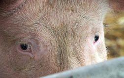 Go Vegan in Parlamento: il senatore Ciampolillo esprime il suo messaggio in difesa degli animali