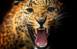 L'uomo predatore rappresenta l'insensibilità verso la condizione degli altri