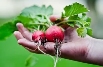 Ravanelli: perché fanno bene al nostro organismo.