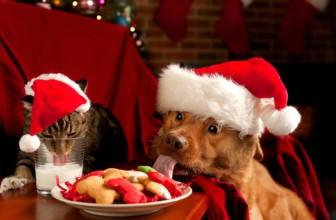 I 5 Regali di Natale più apprezzati da un Vegano