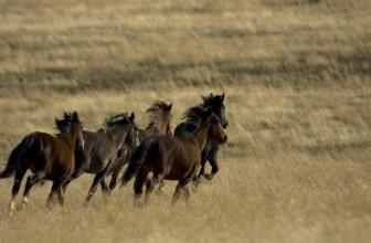 """""""Il cavallo: macchina o animale?"""" il 19 maggio a Roma la conferenza."""