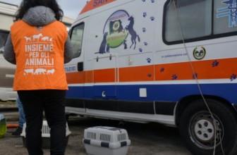 Numero unico per la segnalazione di animali vagnati e feriti, istituito dalla Regione Lazio