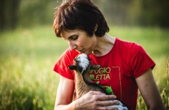 Rifugio Miletta, l'appello di aiuto per sostenere gli animali ospitati