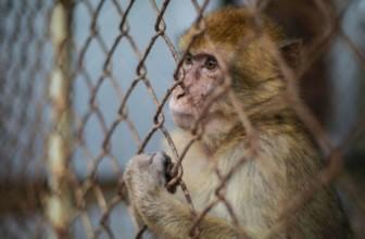 Leggi a protezione degli animali: la riflessione del saggista Franco Libero Manco
