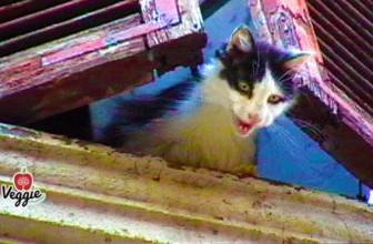 Trappola per gatti: il documentario per sensibilizzare la cittadinanza e le autorità di competenza.