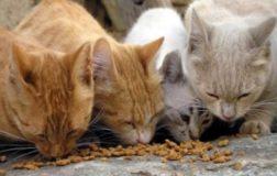 LAV ATTIVA UN FRONT DESK D'EMERGENZA: CORONAVIRUS E ASSISTENZA ANIMALI