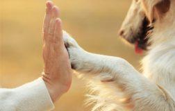 Animal Social Bonus per emergenza Covid-19: LAV chiede al governo e parlamento proposte per le famiglie in difficoltà