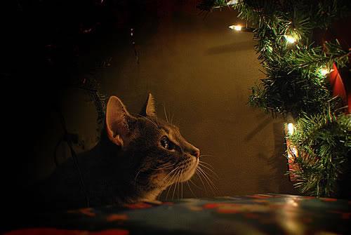 adorno natalizio
