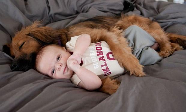 neonato cane