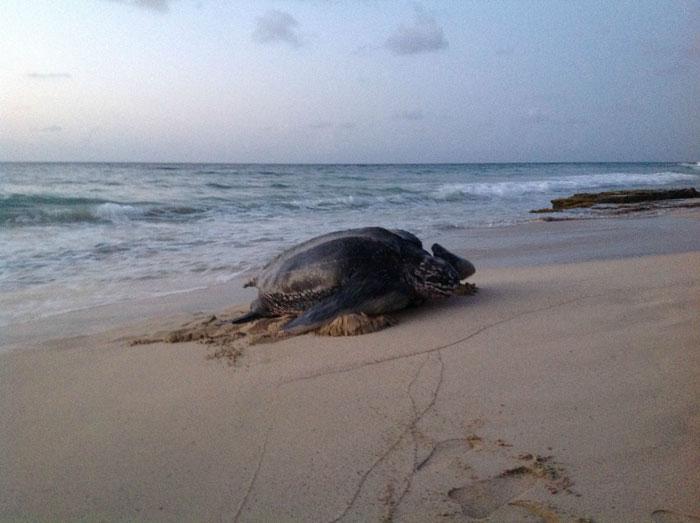 7mkky-sea-turtle2