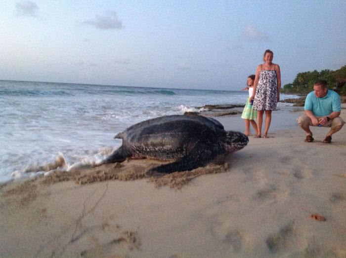 pa5rh-sea-turtle3