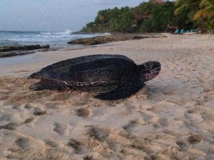 wbqla-sea-turtle4