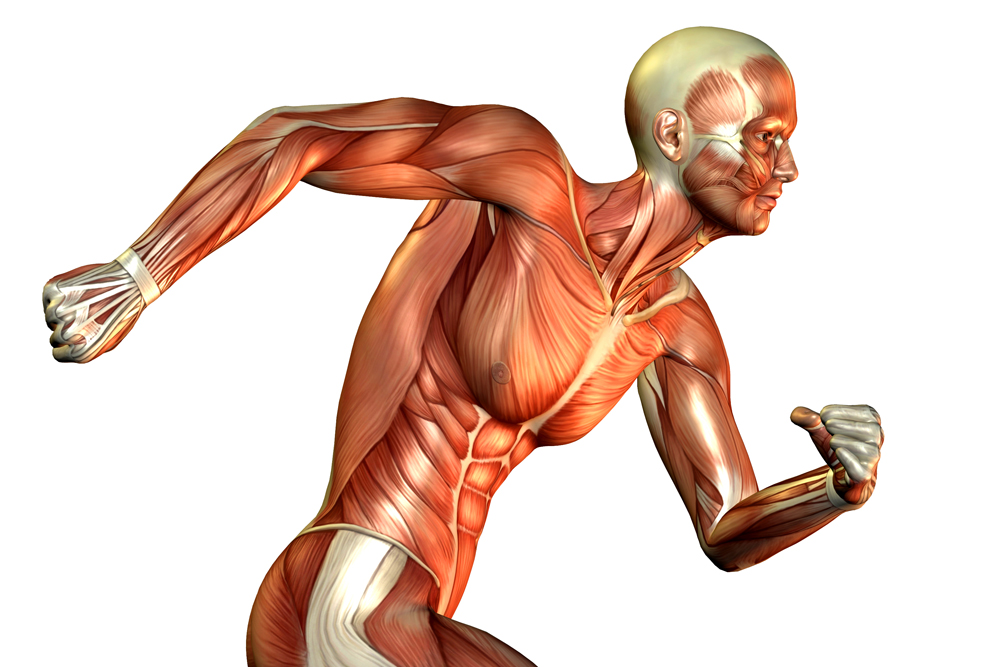 Che atleta sei? No, che fibre hai?
