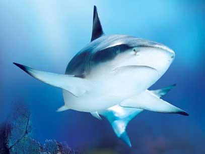 Al Sea Life Jesolo ritorna la Shark Week