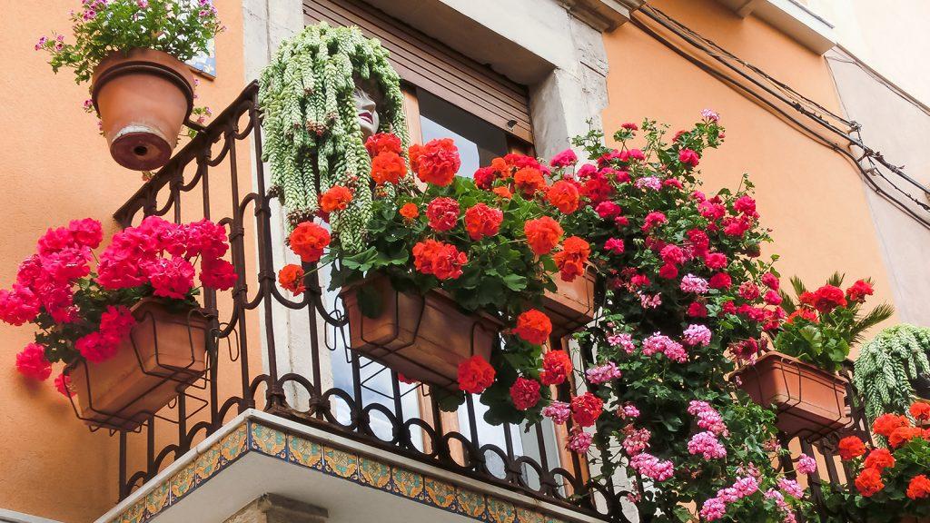 innaffiare piante durante e vacanze fiori