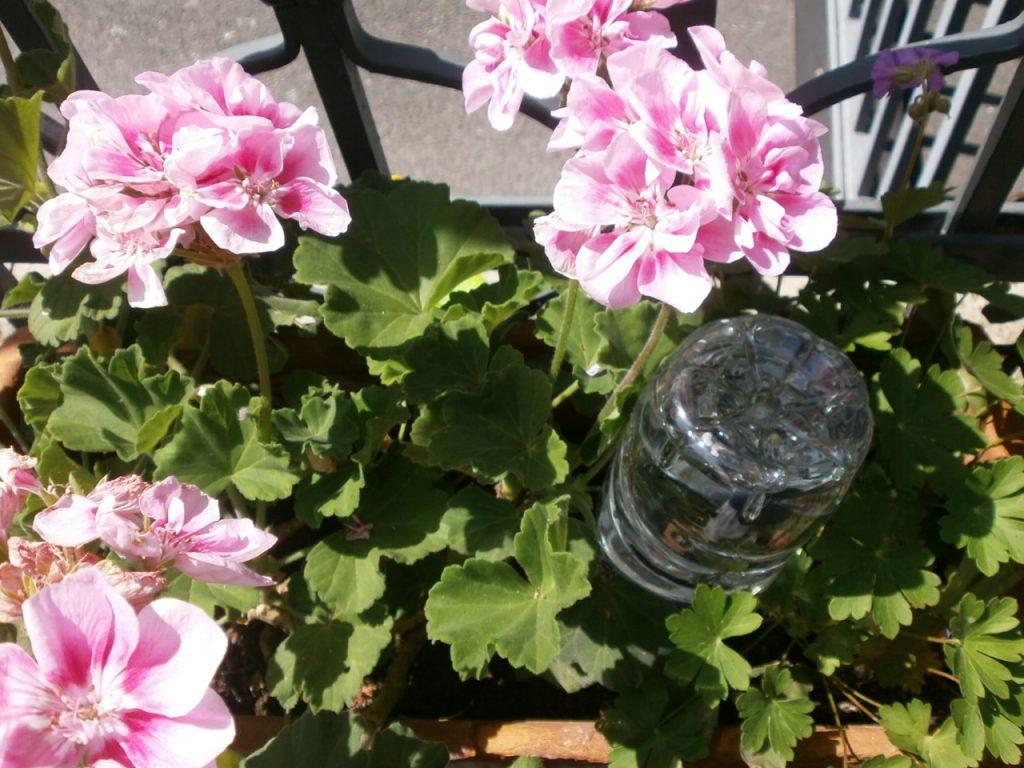 innaffiare piante durante le vacanze bottiglia